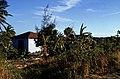 Bahamas 1989 (553) Great Exuma Rolleville (25256767141).jpg