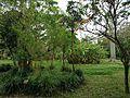 Bambusa vulgaris and musa basjoo in Shikina Garden.JPG