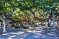 Banyan Court Park, Lahaina, Maui, Hawai'i (33476075706).jpg