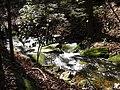 Bearden Creek - panoramio (2).jpg