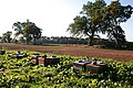 Beehives near Ardovie - geograph.org.uk - 575983.jpg