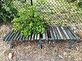 Bench, Koscian.jpg