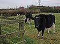 Beverley sisters - geograph.org.uk - 629385.jpg