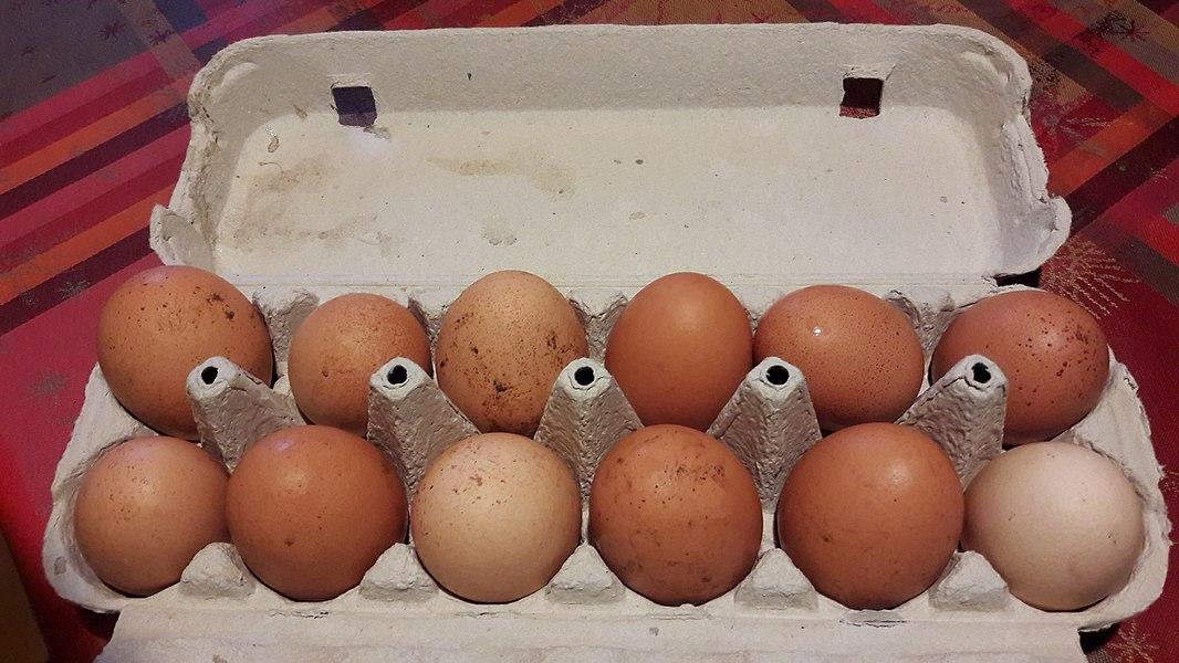 Bio-Eier unsortiert in Lothringen/Frankreich