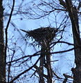 Birds Nest (5822956510) (2).jpg