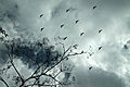 Birds at the sky.JPG