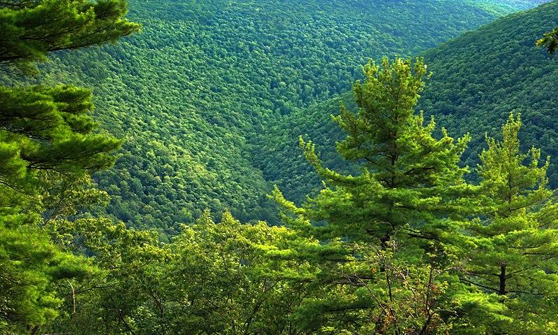 File:Black Forest Trail Vista (7) (9540225677).jpg