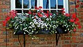 Black Horse Inn patio window box in Nuthurst West Sussex England.jpg