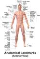 Blausen 0020 AnatomicalLandmarks Anterior.png