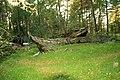 Boats in Mazirbe woods - panoramio.jpg