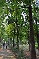 Bodhgaya (8716404095).jpg