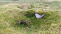Bodmin Moor, Cornwall-9139.jpg