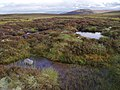 Boggy moorland, Hill of Aitnoch - geograph.org.uk - 1468036.jpg