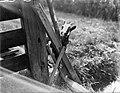 Bokje bij een hek bij het Gein (verm bij een molen), Bestanddeelnr 252-0875.jpg
