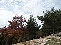 Boschetto intorno a Gorga - panoramio.jpg