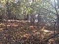 Bosco in autunno presso Largnano - panoramio.jpg