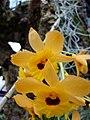 Botanic Gardens - 4 (389207193).jpg
