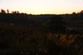 BrachterWald bei Sonnenaufgang02.png