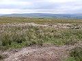 Brackenbridge Moss - geograph.org.uk - 1340736.jpg