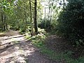 Bridleway from Newnham's Wood merges with track to Newnham's Wood house - geograph.org.uk - 1532177.jpg