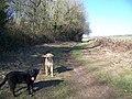 Bridleway towards Harley Down - geograph.org.uk - 687986.jpg
