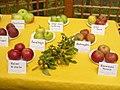 Britzer Garten - Apfelnschau (Apple Show) - geo.hlipp.de - 29285.jpg