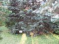 Briukhovychi Arboretum (3).jpg