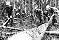 Bundesarchiv Bild 183-1982-0728-004, Forstarbeiter, Studentenbrigade.jpg