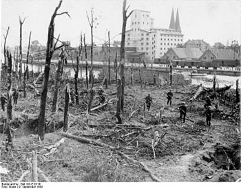 Destroyed forest on the Westerplatte