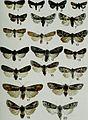 Butterflies and moths of Newfoundland and Labrador - the macrolepidoptera (1980) (20322991350).jpg
