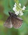 Butterfly (Lepidoptera) - Kitchener, Ontario 01.jpg