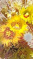 CA 2500 ANZA BORREGO (3-26-2016) plum wash, anza-borrego state park, san diego co, ca -10 (26197510221).jpg