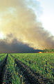CSIRO ScienceImage 4426 Burning sugar cane prior to harvesting at Frank Balettas farm Brandon near Ayr Burdekin Irrigation Area SE of Townsville QLD.jpg