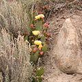 Cactus 046.JPG
