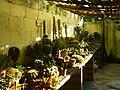 Cactus Nursery At Anuradhapura.jpeg