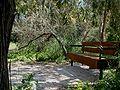 Callistemon coccineus at Ilanot arboretum-RJP.jpg