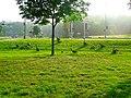 Canada Geese - panoramio (2).jpg
