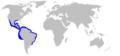 Carcharhinus porosus distmap.png