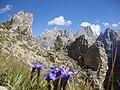 Cartolina a tutti gli amanti della Montagna - panoramio.jpg