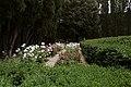 Casagrande dei serristori, giardino, roseto 04.jpg