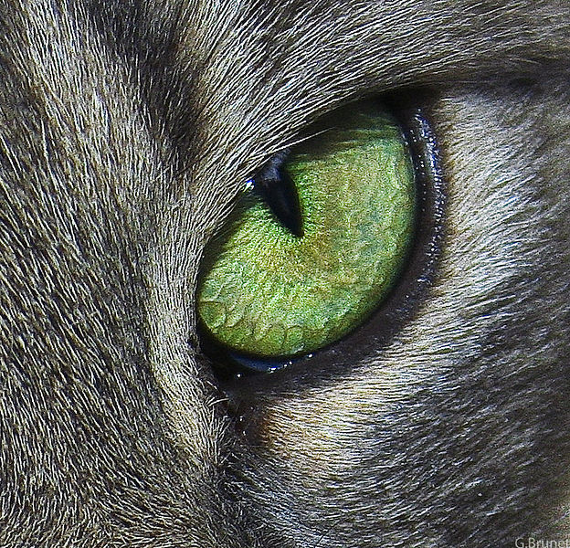Tiedosto:Cats eye.jpg