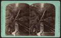 Cavenr gorge, Watkins Glen, by Crum, R. D., fl. 1870-1879.png