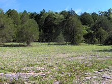 Photograph of a cedar glade, a rare ecosystem found in Middle Tennessee