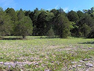 Cedars of Lebanon State Park - Image: Cedar glade col tn 1