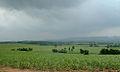 Chai Badan Plantation.jpg