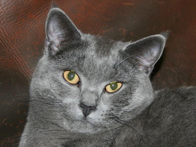 munchkin a adopter