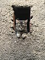 Chat domestique métisse.jpg
