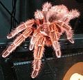 Chilian Fire Hair Tarantula.jpg