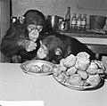 Chimpansees Hilda en Tilly uit Artis, Bestanddeelnr 917-2808.jpg