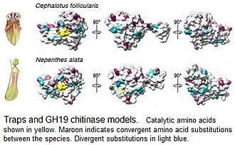 Convergent evolution - Molecular convergence in carnivorous plants